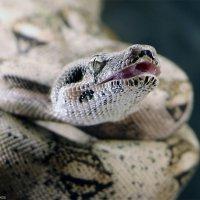 змея :: Laryan1