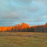 Лес в вечернем свете :: Анатолий Антонов