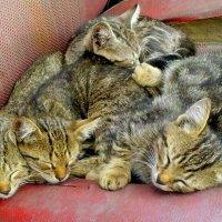 коты :: алексей сергиенко