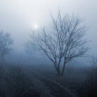 Туманное утро :: Эдуард Цветков