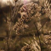 закат в поле :: Алёна Колесова