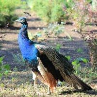 Красивая птичка :: Руслан Грицунь