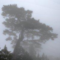 Туман :: LENUR Djalalov