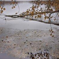 Ветви над водой. :: Лилия *