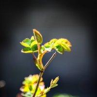 Весной жизнь просыпается... :: Геннадий Калюжный