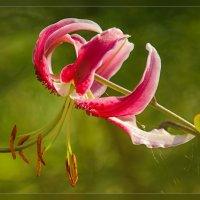 Этот цветок счастья глоток :: Luis-Ogonek *
