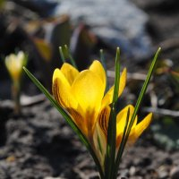 Весна пришла :: Владимир Клюев