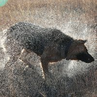 Солнечная собака :: Ирина Михалева