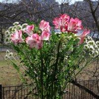Цветы у окна :: Aнна Зарубина