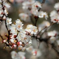 Blooming :: Ekat Grigoryeva