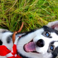 Счастливый пес :: Александра Карпушкина