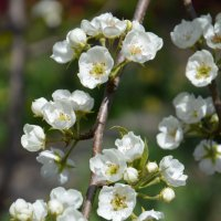 Весна :: Надежда Лунева