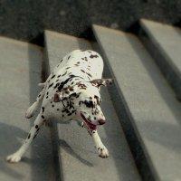 Танец на ступенях! :: Владимир Шошин