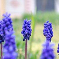 весна, цветочки))) :: Анна Губенко