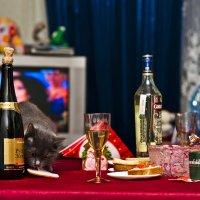 Новый год у всех, и у кошек тоже! :: Константин Вавшко