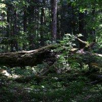 В лесу :: Нина Сигаева