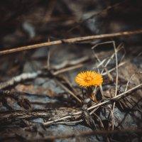 Первые цветы :: Дмитрий Люльчак