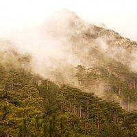 внезапный туман :: LENUR Djalalov