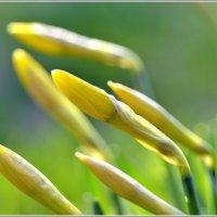 Весенний цвет :: Николай Кувшинов