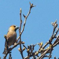 Помогите определить птицу 2 :: Владимир Маслов