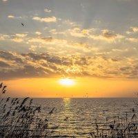 Солнце взошло :: Константин Бобинский