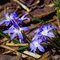 Первые цветы в лесу :: Viacheslav Birukov