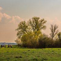 Ходють кони :: Владимир Самсонов