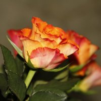 Цвет цветка :: esadesign Егерев