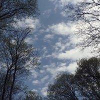 небо в воскресение... :: Мария Климова