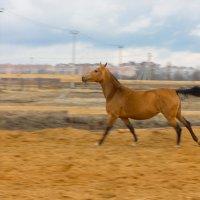 Ахалтекинская лошадка :: Светлана Старикова