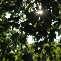 Луч солнца :: Инна Батищева