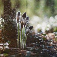 Утром в лесу.. :: Наталья Лещинская