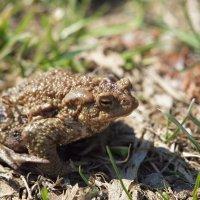 Мудрая жаба. :: Андрей Зайцев