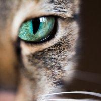 Cat's Eye :: Evgeny Donskov