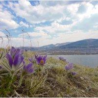 цветы :: Сергей Странник