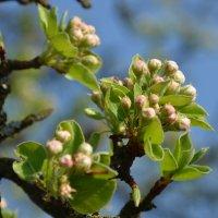 Весна :: Леся Вишня