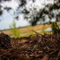 хвойный лес :: Евгений Бутрамеев