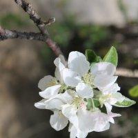 Весна) :: Мария Шатрова
