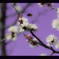 Весна :: Владимир Каминский