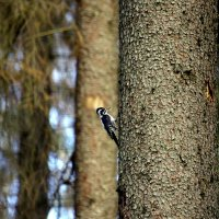 лес подмосковья :: гог