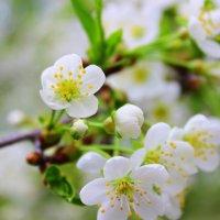 Весна :: K.L. PHOTOGRAPHY