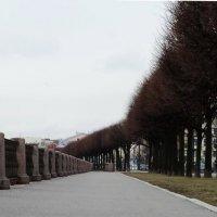 Набережная.Тротуар.Деревья. :: Владимир Гилясев