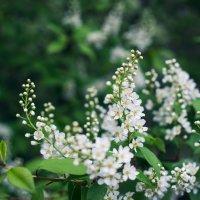 Вокруг цветы и сказочные ароматы! :: Анна Бовсуновская