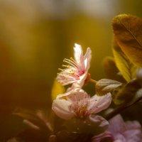 Цветок.2. :: Валера Шаповалов