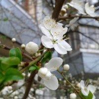 Весна пришла! :: Татьяна Сухова