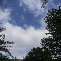 Облака - белокрылые лошадки...)) :: Марина Бахтарышева