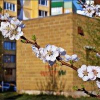 цветение :: лиана алексеева