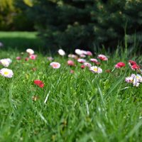 весенние цветы :: валерий попов