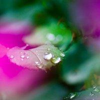 Розовые пятна :: Ксения Пугачева