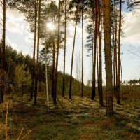 прогулка в лес :: Юрий Бичеров